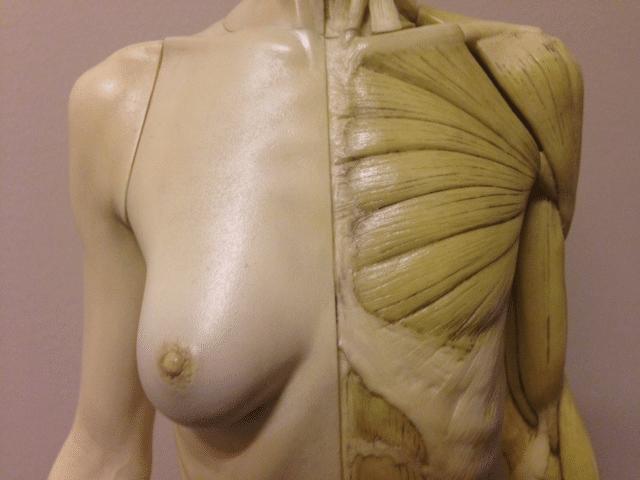 body contouring las vegas